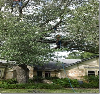 Tree-Service-Georgetown